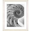 """Studio Works Modern """"Cambrian Sea Shell"""" by Zhee Singer Framed Fine Art Giclee Painting Print"""