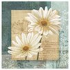 Thirstystone Daisy Field I Occasions Coasters Set (Set of 4)