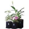 Geopot Planter Kit Combo