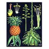 Evive Designs Vintage Pineapple Chart by Evie Alessandria Graphic Art
