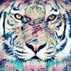 "Salty & Sweet ""White Tiger"" Graphic Art on Canvas"