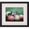 Art Effects Comice Pears II by Rachel Perry Framed Photographic Print