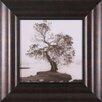Art Effects Coast Oak Tree Framed Photographic Print
