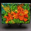 "Kim Rody Creations Mountain ""Day Lilies"" Giclee Print on Gallery Wrapped Canvas"