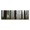 Artist Lane Elderly Giants, Dandenong Ranges by Andrew Brown Photographic Print on Canvas