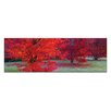 Artist Lane Bright Reds by Andrew Brown Photographic Print on Canvas