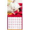TFPublishing 2015 Cat Dreams Wall Calendar