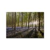 <strong>Portfolio Bluebell Landscape Printed Photographic Print on Canvas</strong> by Graham & Brown