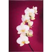 Graham & Brown Graham and Brown Fucshia Orchid Lacquer Photographic Print