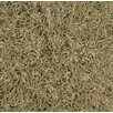 <strong>Dalyn Rug Co.</strong> Super Shag Oregano Rug