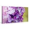 Caracella Leinwandbild Purple Hyacinth