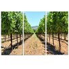 Ready2hangart 'Napa Grapes' by Christopher Doherty 3 Piece Photographic Printt on Canvas Set