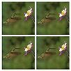 <strong>McGowan</strong> Tuftop Hummingbird and Columbine Coasters (Set of 4)