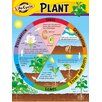 <strong>Chart Life Cycle Of A Plant K-3</strong> by Trend Enterprises