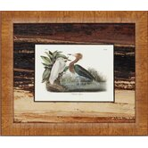 Graceful Water Fowl by Audobon Traditional Art (Set of 3) - 17&quot; x 20&quot;