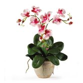 Triple Mini Phalaenopsis Silk Orchid Arrangement in Pink