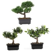 8.5&quot; Silk Bonsai Plant in Green (Set of 3)
