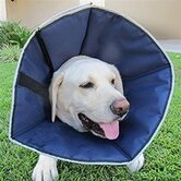 Procone Soft Recovery Collar in Navy