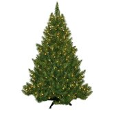 Evergreen Fir Prelit Christmas Tree with 250 Clear Lights