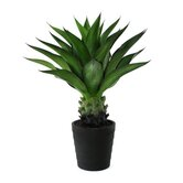 32&quot; Artificial Crown Cactus Plant