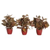 Floral Artificial Potted French Ivy in Brown (Set of 3)