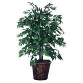 Blue Wreath and Garland American Bush Floor Plant in Planter