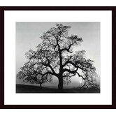 Oak Tree, Sunset City, California by Ansel Adams Wood Framed Art Print