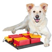 Poker Box Dog Activity Game