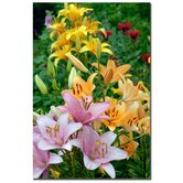 "Lovely Lilies by Kurt Shaffer, Canvas Art - 24"" x 16"""