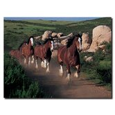 Clydesdales Running Free Canvas Art