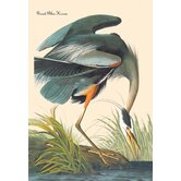 Great Blue Heron Canvas Art