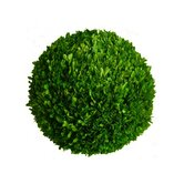 "Boxwood 16"" Ball"