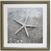 Premier Starfish Shell Wall Art