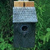 Bluebird in Birdhouse