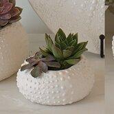 Ceramic Urchin Bowl