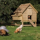 Small Animal Hutches & Cages