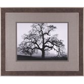 Oak Tree, Sunset City Framed Artwork
