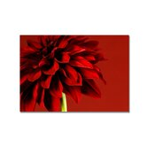 Red Dahlia Printed Canvas Art - 30&quot; X 40&quot;