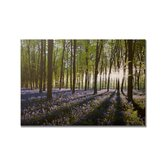"Bluebell Landscape Printed Canvas Art - 30"" X 40"""