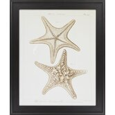 Striking Starfish II by Vision Studio Framed Graphic Art