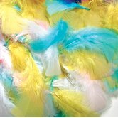 Feathers Spring Colors