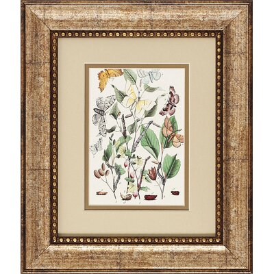 Propac Images Butterflies III/IV Wall Art (Set of 2)