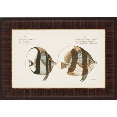 "Paragon Antique Fish by Bloch Waterfront Art (Set of 4) - 19"" x 27"""