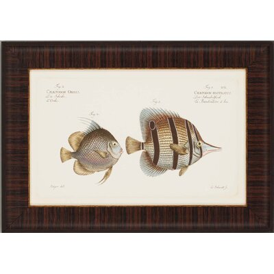 "Paragon Antique Fish by Bloch Waterfront Art - 19"" x 27"""
