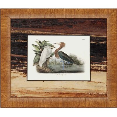 "Paragon Graceful Water Fowl by Audobon Traditional Art - 17"" x 20"" (Set of 3)"
