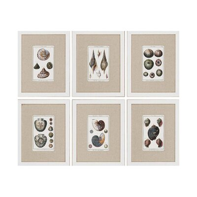 "<strong>Paragon</strong> Sea Shells by Diderot Waterfront Art - 15"" x 19"" (Set of 6)"
