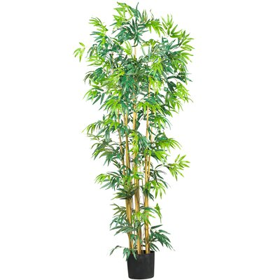 Silk Bambusa Bamboo Tree in Green