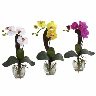 Mini Phalaenopsis Orchid Arrangement (Set of 3)