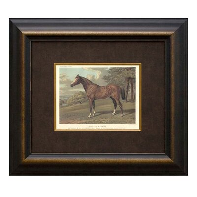 <strong>Phoenix Galleries</strong> Stilton Horse Framed Print