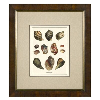 <strong>Phoenix Galleries</strong> Varieties of Tonna Framed Print